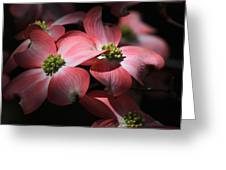 Dogwood Blossoms Greeting Card by Donna Kennedy