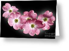 Dogwood Blossoms Greeting Card by Tony Cordoza
