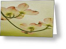 Dogwood Panoramic Greeting Card by Cheryl Young
