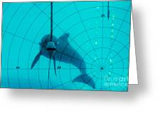 Dolphin Experiment Greeting Card by James L. Amos