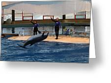 Dolphin Show - National Aquarium in Baltimore MD - 1212139 Greeting Card by DC Photographer