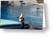 Dolphin Show - National Aquarium In Baltimore Md - 1212145 Greeting Card by DC Photographer