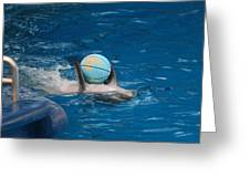 Dolphin Show - National Aquarium in Baltimore MD - 1212155 Greeting Card by DC Photographer