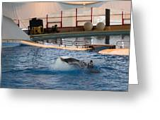 Dolphin Show - National Aquarium In Baltimore Md - 1212167 Greeting Card by DC Photographer