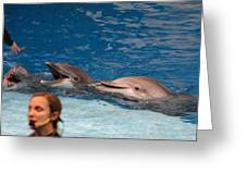 Dolphin Show - National Aquarium In Baltimore Md - 1212177 Greeting Card by DC Photographer