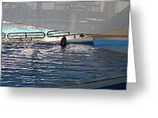Dolphin Show - National Aquarium In Baltimore Md - 121219 Greeting Card by DC Photographer