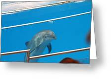 Dolphin Show - National Aquarium In Baltimore Md - 1212193 Greeting Card by DC Photographer