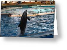 Dolphin Show - National Aquarium In Baltimore Md - 1212209 Greeting Card by DC Photographer