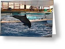 Dolphin Show - National Aquarium In Baltimore Md - 1212215 Greeting Card by DC Photographer