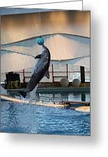 Dolphin Show - National Aquarium In Baltimore Md - 1212234 Greeting Card by DC Photographer