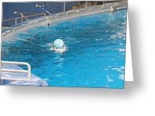 Dolphin Show - National Aquarium in Baltimore MD - 121236 Greeting Card by DC Photographer