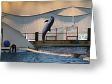Dolphin Show - National Aquarium in Baltimore MD - 121255 Greeting Card by DC Photographer