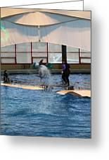 Dolphin Show - National Aquarium In Baltimore Md - 121267 Greeting Card by DC Photographer