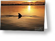 Dolphin Sunrise Greeting Card by Fred Benavidez