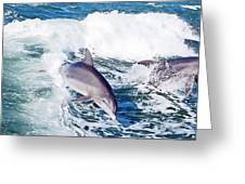 Dolphins Jumping Greeting Card by Aimee L Maher Photography and Art