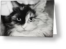 Domestic Cat Greeting Card by Natasha Denger