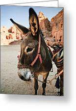 Donkey Greeting Card by Jelena Jovanovic