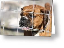 Don't Fence Me In Greeting Card by Terry Fleckney