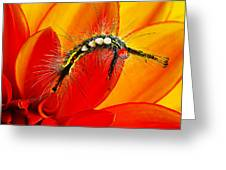 Don't Touch Greeting Card by Bill Caldwell -        ABeautifulSky Photography