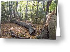 Door Bluff Headlands Cp Fallen Tree Greeting Card by Jim Baker