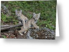 Double Trouble Greeting Card by Sandra Bronstein