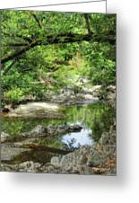 Down By The Creek Greeting Card by Donna Blackhall