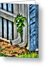 Downspout Greeting Card by Michael Braham