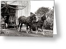 Draft Horses At Work Greeting Card by Olivier Le Queinec