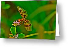 Dragonfly And Flower Greeting Card by Lorri Crossno