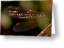 Dragonfly Jewels Greeting Card by Rona Black