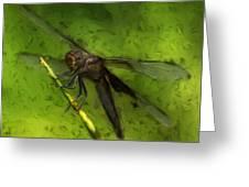Dragonfly Macro Greeting Card by Jack Zulli