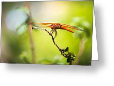 Dragonfly Smile Greeting Card by Priya Ghose