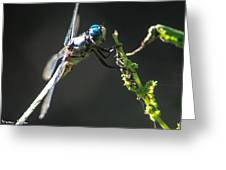 Dragonfly Taking A Rest Greeting Card by Steven  Taylor