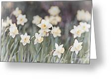 Dreamy Daffodils Greeting Card by Elena Elisseeva