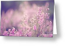 Dreamy Pink Heather Greeting Card by Natalie Kinnear