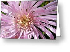 Dressed In Pink Greeting Card by Leana De Villiers