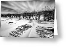 Drifting snow Greeting Card by John Farnan