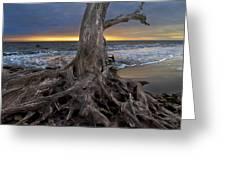 Driftwood On Jekyll Island Greeting Card by Debra and Dave Vanderlaan