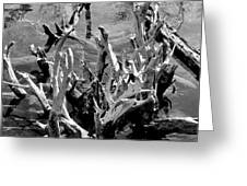 Driftwood on Lost Lake Greeting Card by Michelle Calkins
