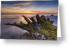 Driftwood On The Beach Greeting Card by Debra and Dave Vanderlaan