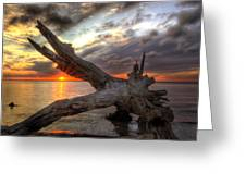 Driftwood Sunset Greeting Card by Greg and Chrystal Mimbs