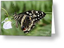 Drinks With A Giant  Swallowtail Greeting Card by Ruth Jolly