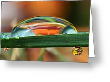 Drops Of Abstract I Greeting Card by Gary Yost