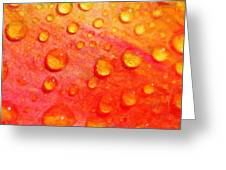 Drops On Flower Petals Greeting Card by Toppart Sweden