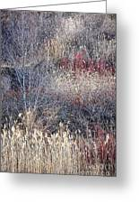 Dry Grasses And Bare Trees Greeting Card by Elena Elisseeva