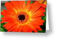 Dsc527d Greeting Card by Kimberlie Gerner
