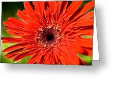 Dsc751d1-001 Greeting Card by Kimberlie Gerner