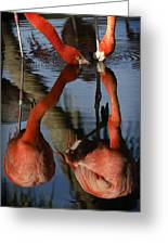 Dual Flamingo Reflections Greeting Card by Dave Dilli