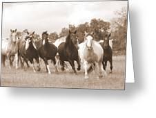 Duchess Sanctuary Big Herd Greeting Card by Duchess Sanctuary