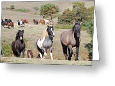 Duchess Sanctuary On The Move Greeting Card by Duchess Sanctuary